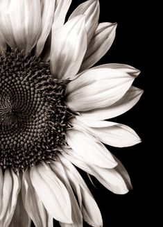 black & white sunflower. Love the detail but in color.