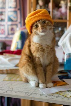 beautiful ginger cat wearing an orange hat
