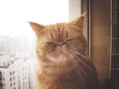 now this cat looks more like garfield 