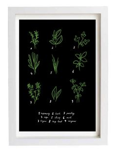 Herbs Print