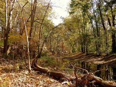 pinterest landscape photography | Swan Creek Autumn by Rita Malkin | Landscape photography