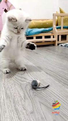 Funny Cute Cats | Funny Cats | Cute Cats Cute Little Kittens, Cute Baby Dogs, Cute Little Animals, Baby Cats, Funny Cute Cats, Cute Funny Animals, Cutest Kittens Ever, Gato Gif, Beautiful Kittens