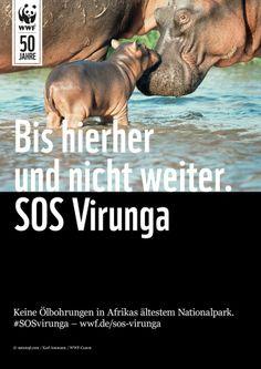 #SOSvirunga: Keine Ölbohrungen in Afrikas ältestem Nationalpark! Jetzt Petition unterschreiben: http://www.wwf.de/sos-virunga-pin  Bitte REPINNT diesen Beitrag mit euren Freunden!