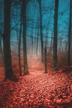 Forest in Romania | Adrian Calugaru