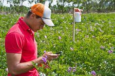 Crearán el Sistema Nacional de Innovación Agropecuaria