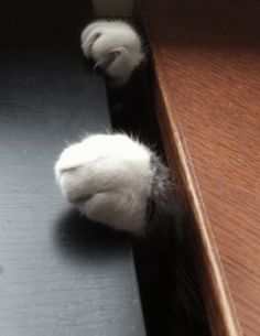 Lest you forget that I the Monkey am omnipresent ! (here, under your desk)