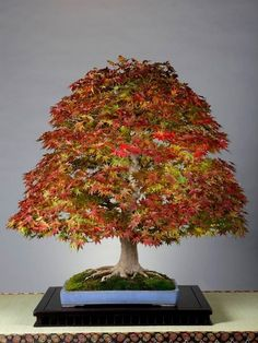 Bonsai of Autumn