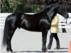 The Canadian... Beautiful Strong and Black....