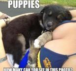 Puppies - girl boob meme