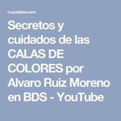 Secretos y cuidados de las CALAS DE COLORES por Alvaro Ruiz Moreno en BDS - YouTube