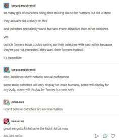 "Ostriches <a href=""https://go.redirectingat.com?id=74679X1524629&sref=https%3A%2F%2Fwww.buzzfeed.com%2Fandyneuenschwander%2F17-tumblr-posts-that-are-funny-but-will-also-teach&url=http%3A%2F%2Fnews.bbc.co.uk%2F2%2Fhi%2Fuk_news%2Fscotland%2F2834025.stm&xcust=4534051%7CAMP&xs=1"" target=""_blank"">flirt with humans</a>."