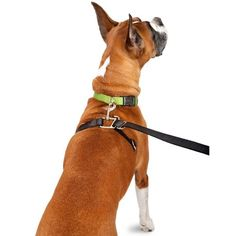 ThunderLeash Small - For dogs up to 25 lbs. - http://www.thepuppy.org/thunderleash-small-for-dogs-up-to-25-lbs/