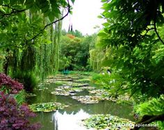 Monet's lily pond in Giverny, France. One of my favorite gardens. Very calm and exquisite.