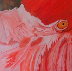 "Flamboyant-  close up original oil painting  bright colored flamingo, large 2.5"" deep, 24"" x 24"" gallery canvas. Original art, original oil painting, animal art"