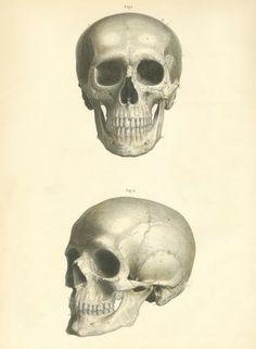 Skull XV