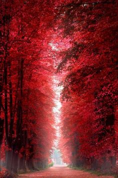 Marsala wedding Burning Red Forest - Roskilde, Denmark would be a perfect hallway full length picture/painting with black doors. Beautiful World, Beautiful Places, Beautiful Pictures, Beautiful Roads, Amazing Places, Color Of The Year, Belle Photo, Amazing Nature, Beautiful Landscapes