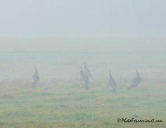 Fading through the fog