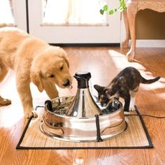 Veterinarians recommend constant fresh water for your pets. The Town Square Stainless Steel Pet Fountain provides 128 oz gal) of constantly filtered water to your pet. Multiple free-falling streams of water entice your pet to drink more. Dog Water Fountain, Drinking Fountain, Cat Fountain, Water Fountains, Dog Care, Dog Bowls, Pet Dogs, Doggies, Pet Supplies