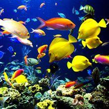 Fear of Fish Phobia - Ichthyophobia