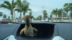 Draft enjoying the views of Hua Hin, Thailand from his perch in the Ford #EcoSport #EcoSportDrive #Ford #JennieVickers #Zeopard