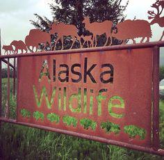 Alaska Wildlife Conservation Center, Seward Highway