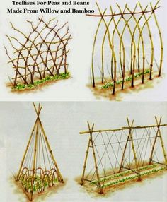 How to Build a Trellis for Growing Peas.... DIY Trellis ideas using willow and bamboo....