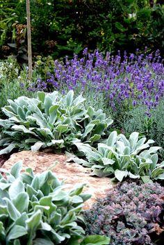 "lammöron ""silver carpet"" får inga blommor!!! Sun Garden, Garden Cottage, Garden Sofa, Landscaping With Rocks, Front Yard Landscaping, Outdoor Plants, Outdoor Gardens, Mediterranean Garden Design, Home And Garden Store"