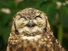 Google Image Result for http://www.aktifmag.com/wp-content/uploads/2013/02/owls-being-cute-18.jpg