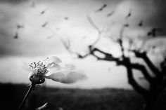 Untitled, photography by Francesco Federiconi
