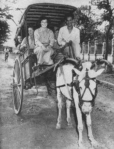 Pre-war Manila Women's Army Corps, Horse Wagon, Filipino Culture, Mindanao, Female Soldier, Vintage Pictures, World War Two, Old Photos, Planer