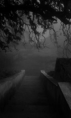 This photo is eerie yet beautiful and interesting. The black and white scheme lends to the feeling by making the fog seem even creepier, as if it's straight out of an old horror film. Dark Photography, Black And White Photography, Landscape Photography, Arte Obscura, Dark Places, Black And White Pictures, Belle Photo, Dark Art, Mists