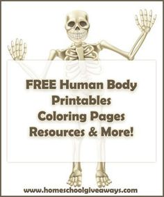 FREE human anatomy printables you may enjoy: coloring pages, lapbooks, unit studies, & more! Human Body Activities, Science Activities For Kids, Science Lessons, Life Science, Science Experiments, Elementary Science, Science Education, Teaching Science, Physical Education