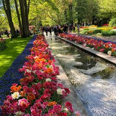 Daffodils, Tulips, Tulip Fields Netherlands, Day Trips From Amsterdam, South Holland, Amsterdam Canals, Garden Guide, Tour Tickets, Short Trip