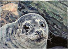 'Look into my eyes' baby #seal #art #animals #gouache