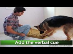 "Dog Trick Tutorial: ""Clean Your Paws!"" - YouTube"