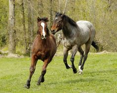 Wistfully Country, Horses Running by mstoy on Flickr.