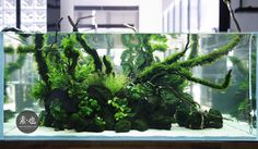 Simon's Aquascape Blog : Photo