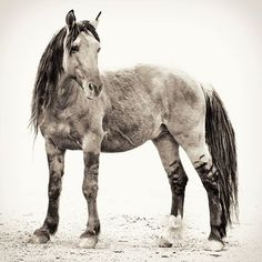 Love his leggings...Chief Spanish Wild Mustang.. by Kat Living Good Photography