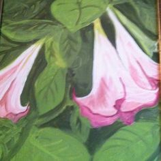 Pink trumpet plant