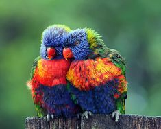 Community Post: 5 Cute Animal Photos To Cheer You Up - On to the bird family! All birds are cute, but this parrot couple wins the prize for today! shares 5 of the cutest animal photos with us. Pretty Birds, Love Birds, Beautiful Birds, Animals Beautiful, Cute Animals, Funny Animals, Wild Animals, Two Birds, Beautiful Couple