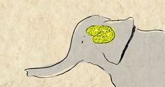 Learn all about elephants in this fascinating TED Ed lesson