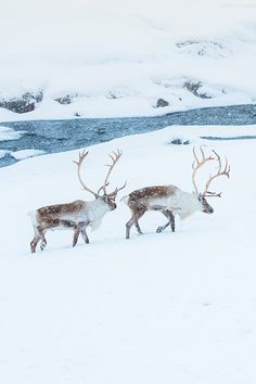 Reindeer on ice by CoolBieRe