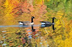 Lake Peachtree  Peachtree City, Ga. Fall on the lake.