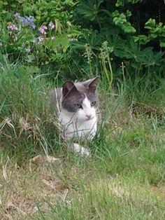 Max in het lange gras