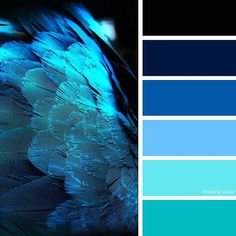 Shades Of Blue Feathers (Photo Credit: verycoolphotoblog.com) #chasingcolor #colorthemes #colorful #color #palette #colorpalette #shades #tones #hues #colorinspiration #inspiration #creative #art #photography #design #theme #nature #bird #feathers #blue #bright #turquoise