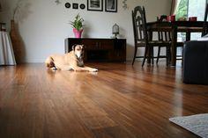 Java Renegade Hardwood® Pet friendly flooring. Dog friendly bamboo hardwood.