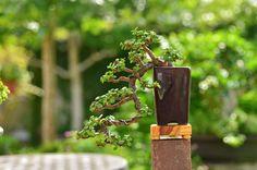 Bonsai Trees for Beginners Jade Bonsai, Succulent Bonsai, Bonsai Plants, Planting Plants, Garden Terrarium, Bonsai Garden, Terrariums, Cactus, Bonsai Styles