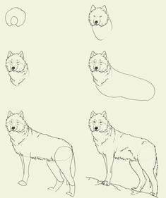 drawing for girls | how to draw wolf How to draw wolf