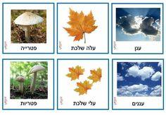 Kindergarten, Classroom, School, Plants, Class Room, Kindergartens, Plant, Preschool, Preschools