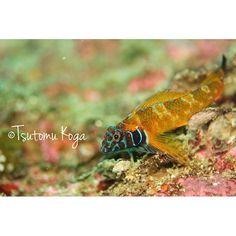 【tsutomu_koga】さんのInstagramをピンしています。 《Photo  japan chiba  Katsuura hamanamegawa  Diving point  Shinbama  #chiba#nature#underwater#scuba#scubadiving#sea#underwaterphoto#oceanlife#underwaterphotography#divermag#photo#water_of_our_world#dive#diver#openwater#underwaterworld#diving#ocean#oceanlife#igersjp#naturelovers#ダイビング#千葉#行川#カメラ#ファインダー越しの私の世界#canon#海#水中写真#写真好きな人と繋がりたい#写真撮ってる人と繋がりたい》